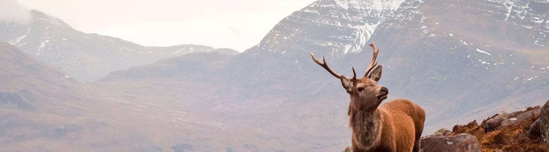 Les meilleurs Whiskies Single Malt écossais ≡ The Whisky Lodge